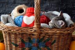 Panier de cadeau de Kitty Cadeau pour n'importe quelle célébration, pour la personne vous aimez Photographie stock