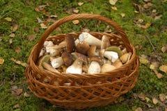 Panier de champignon de couche Photo stock