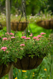Panier de fleur Photo stock