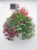 Panier de fleur contre un mur de stuc Images libres de droits
