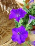 Panier de fleur et en bambou pourpre de floraison Photographie stock libre de droits