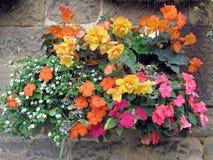 Panier de fleur fixé à un mur en pierre Photographie stock libre de droits