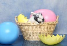 Panier de lapin de Pâques Images stock