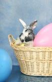 Panier de lapin de Pâques Photographie stock
