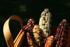 Panier de moisson de maïs Photographie stock libre de droits