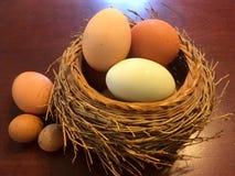 Panier de nid avec des oeufs Photos stock