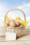 Panier de Pâques avec le poulet et les oeufs de bébé Photos stock