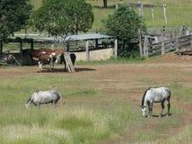 Panier de pêche et porte avec des chevaux images libres de droits