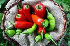 Panier de pepperoni verte et rouge Images stock