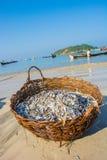 Panier de petits poissons Images libres de droits