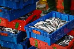 Panier de poissons Photos stock
