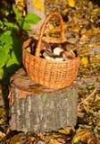 Panier de Wattled avec des champignons Photographie stock libre de droits