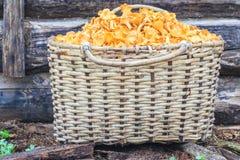 Panier des champignons au fond boisé Photos stock