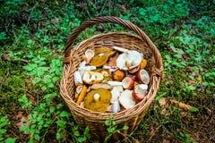 Panier des champignons de couche Photos libres de droits