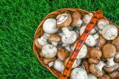 Panier des champignons sur une herbe verte Images stock