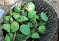 Panier des cosses de lotus à vendre sur un marché cambodgien Photographie stock