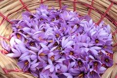 Panier des fleurs de safran Photos stock