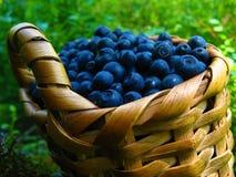 Panier des myrtilles Panier en osier des blueberris sur le fond naturel images stock