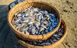 Panier des poissons Images stock