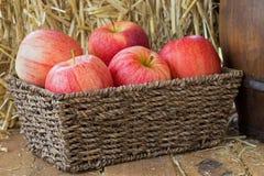 Panier des pommes Images libres de droits
