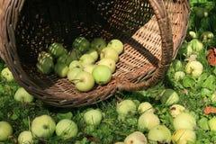 Panier des pommes Photos libres de droits