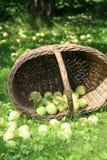 Panier des pommes Photographie stock