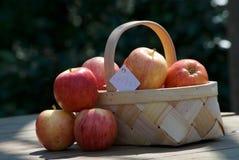 Panier des pommes rouges de sélection de main fraîche Image libre de droits