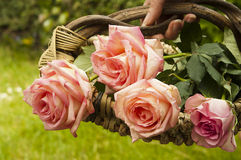 Panier des roses Photographie stock