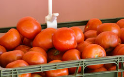 Panier des tomates images libres de droits
