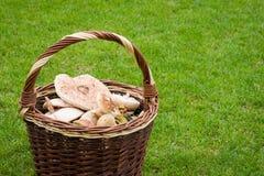 Panier en osier avec des champignons de couche Images libres de droits