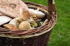 Panier en osier avec des champignons de couche Image stock