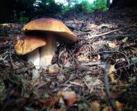 Panier en osier avec des champignons de couche Photographie stock