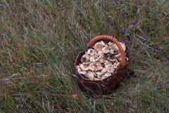 Panier en osier avec des champignons se tenant sur l'herbe verte Photo libre de droits