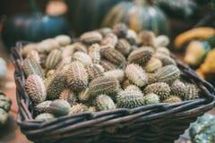 Panier en osier avec le concombre sauvage photos libres de droits