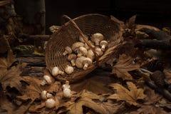 Panier en osier complètement des champignons de couche photo stock