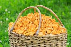 Panier en osier de saule des champignons fraîchement coupés Photos stock