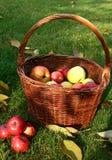 Panier et pommes Images stock