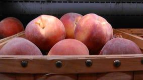 Panier frais de prune Images stock