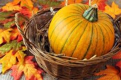 Panier potirons de décoration d'automne de mini Images stock