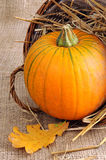 Panier potirons de décoration d'automne de mini Photographie stock libre de droits
