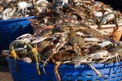Paniers avec des crabes Port de pêche dans l'Inde du sud Images stock