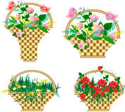 Paniers avec des fleurs Photos stock