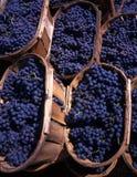 Paniers avec des raisins bleus Images stock