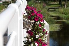 Paniers de fleur Images stock