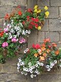 Paniers de fleur de printemps Photographie stock libre de droits