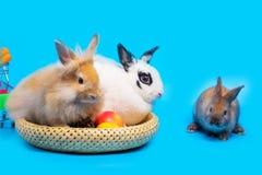 Paniers de lapin et en bambou Placez les légumes sur le fond bleu photographie stock