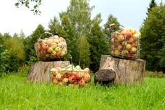 Paniers de pomme Images libres de droits