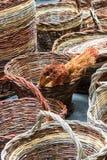 Paniers en osier Photo libre de droits