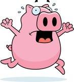 paniki świnia Zdjęcia Stock