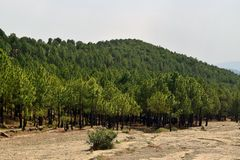 Panjpeer Rocks Pine forest, Kahuta Pakistan! royalty free stock image